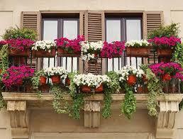 herbstbepflanzung balkon herbstpflanzen für den balkon silberherzen de