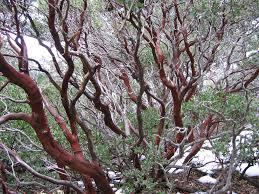 cool trees tree project dm u0027s craft