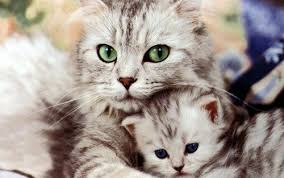 beautiful kittens cats images beautiful cat and kitten hd wallpaper and background
