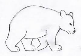 bear drawing step by step samantha bell