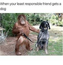 Chemistry Dog Meme - when your least responsible friend gets a dog dog meme on me me