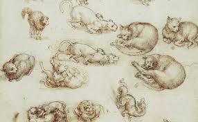 leonardo da vinci quote about learning leonardo da vinci cats drawings and 6 quotes