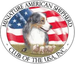 australian shepherd club of america registrations u0026 clubs casita miniature american shepherds