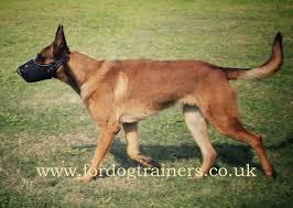 belgian shepherd uk belgian malinois muzzle uk heavy duty dog muzzle k9 50 50