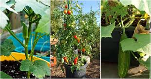 10 best vegetables to grow at home this summer top 10 plants