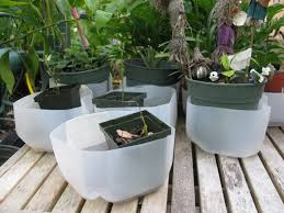 how to make empty milk jug as plant drain tray container gardening