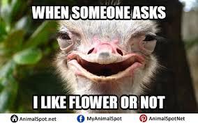 Ostrich Meme - ostrich memes