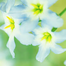 Light Blue And Grey Room Images Amp Pictures Becuo by Light Blue Flowers Gardening Pinterest Ipad Air Wallpaper