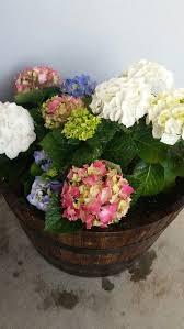 37 best front garden images on pinterest front gardens flower