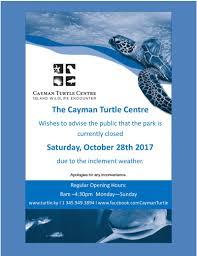 cayman turtle centre explore the best grand cayman excursions