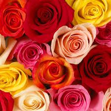 bulk flowers online bulk flowers capnhat24h info capnhat24h info