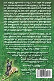 belgian shepherd malinois temperament belgian malinois and belgian shepherd belgian malinois and