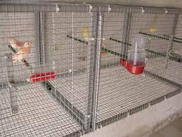 reti per gabbie voliera selezione canarini salbos