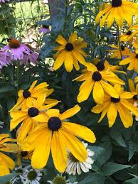 south central pennsylvania native plants mcall com lehigh valley master gardeners blog