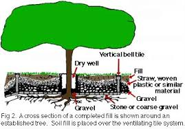 How To Regrade A Backyard Protecting Existing Landscape Trees From Construction Damage Due