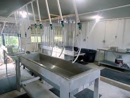 on farm poultry processing at healthy hen farms carolina farm