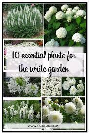25 best white gardens ideas on pinterest white flowers garden