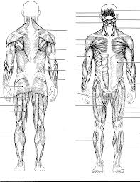 Anatomy And Physiology Muscle Labeling Exercises Muscle Anatomy Worksheet Answers Anatomy And Physiology Matesic