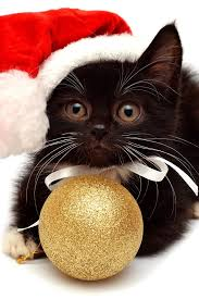 best 25 christmas cats ideas on pinterest cats doing funny