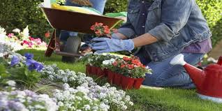 reasons people laugh about your gardening for beginners