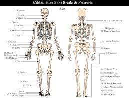Anatomy Of Human Body Bones Bone Chart Human Body Bone Chart Human Body Anatomy Organ