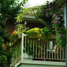 125 best balcony gardening images on pinterest plants windows