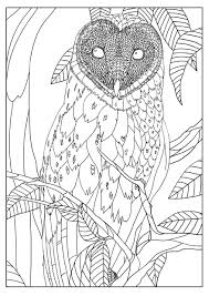 free coloring page coloring barn owl by mizu exclusive