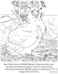 coloring pages recent birds funny little owl colorpages7 com