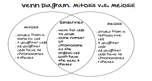 comparing mitosis and meiosis worksheet section 1 why compare