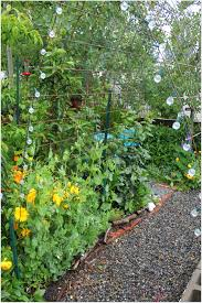 Garden With Trellis Vertical Gardening With Concrete Wire Mesh Grow And Resist