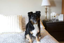 australian shepherd quilt the top pottery barn wedding registry items you should register for