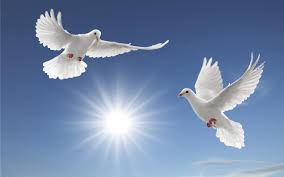 white doves sun rays tsoncheva blue sky and white cloud desktop hd