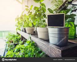 blank name plate sign on pot plants vegetable home garden u2014 stock