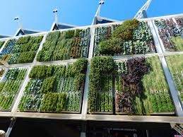 vertical gardening green architecture the plant guide