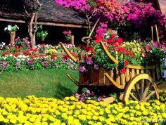 a sweet way to handle your allergies gardens flower and pretty