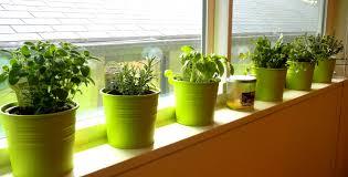 furniture stunning images about indoor kitchen herb garden ideas