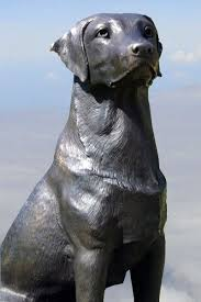 39 best labrador retriever garden statues images on