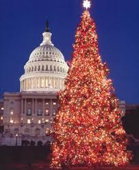 celebrating tree lights around the world