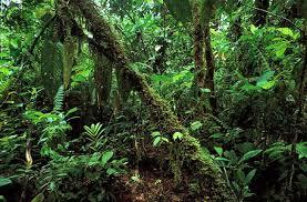 Tropical Dry Forest Animals And Plants - tropical rainforest britannica com