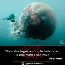 Whaling Meme - 25 best memes about a blue whale a blue whale memes