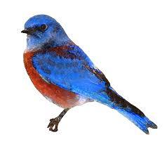 bluebird clipart free bird pencil and in color bluebird clipart