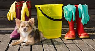 spring cleaning tips for dog owners cesar u0027s way