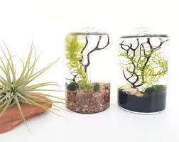 Home Decoration Gifts Live Aquatic Plants Terrarium Kit Bottle With Cork For Office