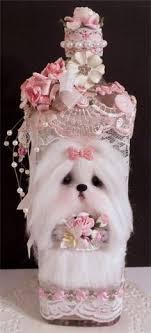 shirley deaville maltese puppy terrier