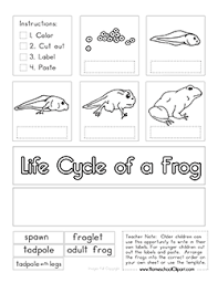 life cycle of a frog cut and paste activity ultimate