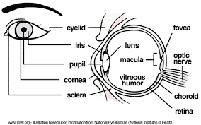 Diseases Of The Eye That Cause Blindness Worst Pills