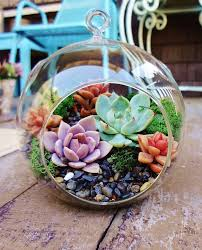 how to set up a succulent terrarium traditional terrariums