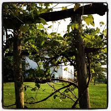 grape vine trellis at pearl s buck birthplace places i u0027ve been