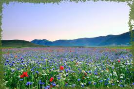 immagini di giardini fioriti bogani giardini