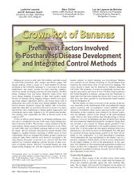 Plant Disease Control Methods - crown rot of bananas preharvest factors involved in postharvest